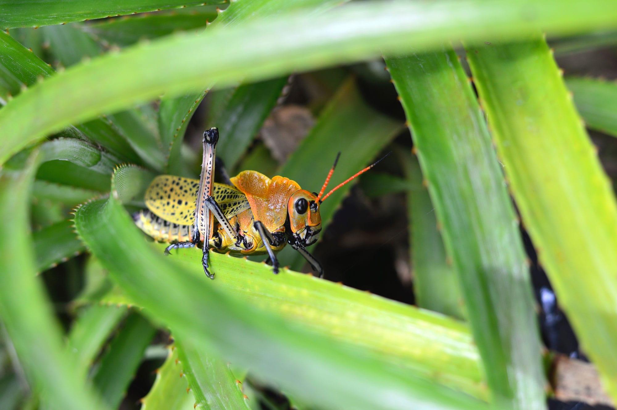 Pest Control Palm Beach County